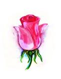 Blomma pink rose Fotografering för Bildbyråer