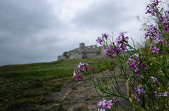 blomma purplen Royaltyfria Foton