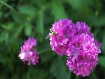Blomma purpurfärgad blommabukettinflyttning vinden lager videofilmer
