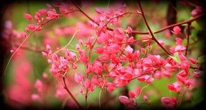 Blomma Pwgchmpo Royaltyfri Fotografi
