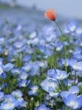 Blomma fotografering för bildbyråer
