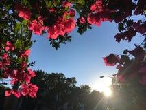 blomma ramen Fotografering för Bildbyråer