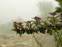 blomma red fotografering för bildbyråer