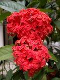 blomma red Arkivfoton