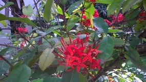 blomma red royaltyfria foton