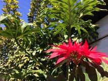 blomma red Royaltyfria Bilder