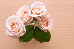 Blomma rosa buske i trädgården royaltyfria foton
