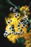 Blomma` s av död Royaltyfri Bild