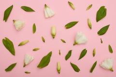 Blomma sammansättning av den vita eustomaen på rosa flatlay arkivbilder