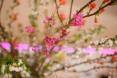 Blomma sammansättning av mycket små och gulliga små blommor Arkivfoton