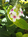 blomma shrub1 Arkivbild