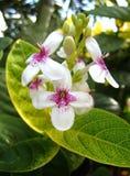 blomma shrub2 Royaltyfri Foto