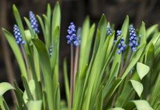 Blomma Sidor för gräsplan för fantastisk blåttblomma stora blommar purpurt litet Arkivfoto
