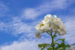 blomma skyen Royaltyfri Bild
