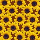 Blomma solros, guling, natur, blommor, sommar, växt, Arkivbild