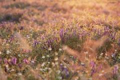 Blomma som är löst i solnedgång arkivfoto