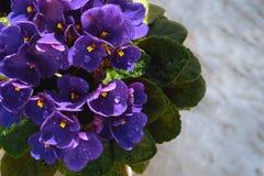 Blomma som är violett i en kruka på marmorfönsterbrädan royaltyfri bild
