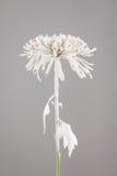 Blomma som besprutas med vit målarfärg Arkivbild