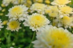 Blomma som blommar bakgrundstapeten arkivbilder