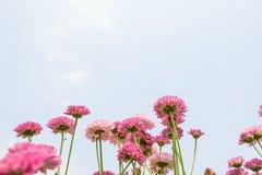 Blomma som blommar bakgrundstapeten royaltyfri fotografi