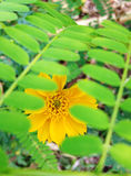 Blomma som döljas under sidor Fotografering för Bildbyråer