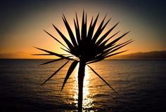 Blomma som en sol Arkivfoto