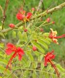 Blomma som exponerar liv Arkivfoton