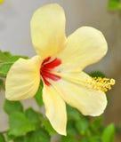Blomma som exponerar liv arkivbilder