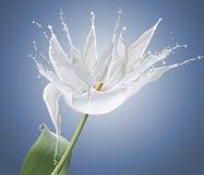 Blomma som göras av vita färgstänk Royaltyfria Foton