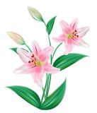blomma som lilly isoleras vektor illustrationer