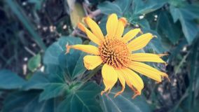 blomma som skiner Arkivfoton