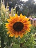 Blomma som vänder mot solen Arkivfoto