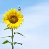 blomma sunen arkivbilder