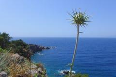 Blomma-tagg Arkivbild