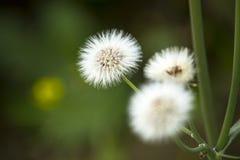 Blomma - tapeter Royaltyfria Foton
