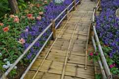 blomma thailand Arkivbild
