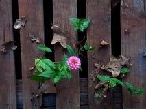 Blomma till och med spillror Royaltyfria Bilder