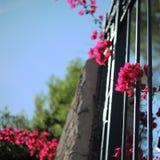 Blomma till och med staketet Royaltyfria Bilder