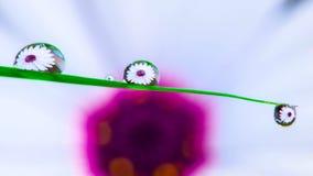 Blomma till och med vattensmå droppar Royaltyfri Fotografi