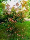 Blomma trädet hemma royaltyfria bilder