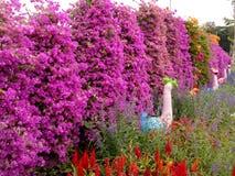 Blomma Trädgård Royaltyfri Fotografi