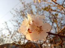 Blomma trädgård fotografering för bildbyråer