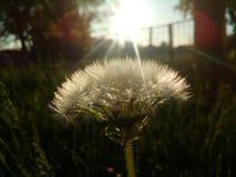 Blomma trädgård Arkivbilder