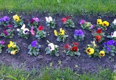 Blomma trädgård, blommor, natur, fält, vår, sommar, växt, rosa färg, gräsplan, äng, gräs, kosmos, blomning, lila, flora, colorfu royaltyfria foton