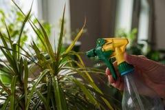 Blomma trädgårdgräsplaner fotografering för bildbyråer