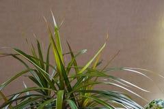 Blomma trädgårdgräsplaner royaltyfri fotografi