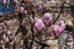 Blomma trädkronblad fotografering för bildbyråer