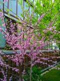 Blomma tr?det hemma royaltyfria foton