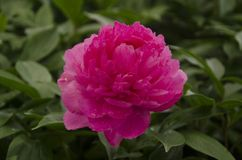 blomma tr?dg?rds- red royaltyfri fotografi