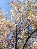 Blomma tre! fotografering för bildbyråer